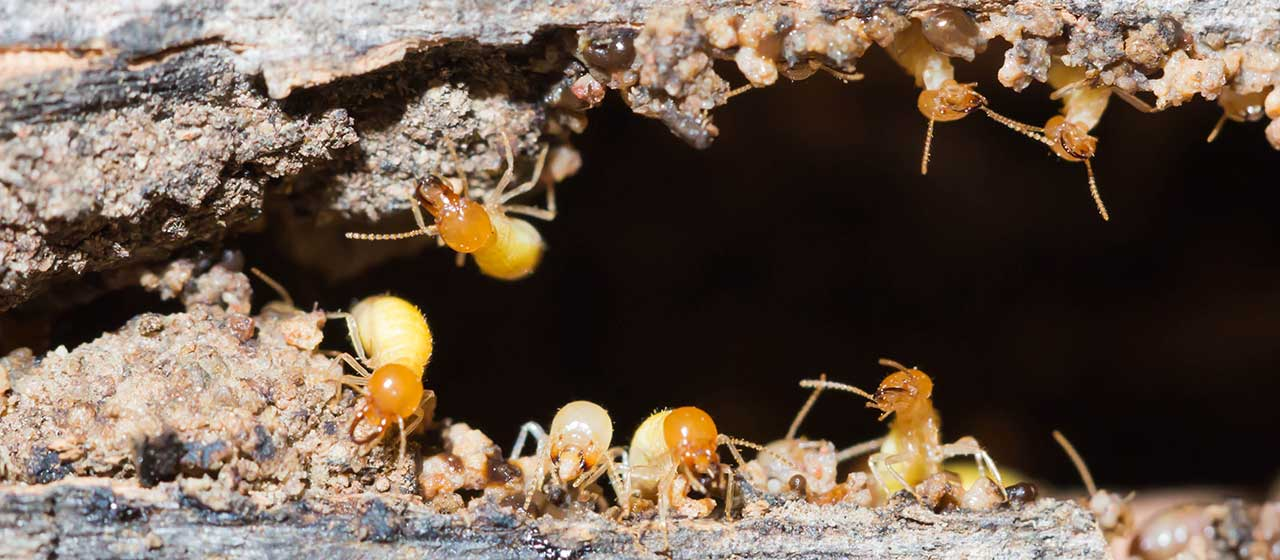 Spray Foam Insulation and Termite Damage